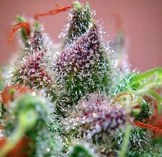 #Purps #Weed #Crystals