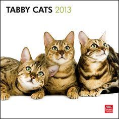 "Tabby Cats Wall Calendar: The term ""tabby"" derives from a kind of plain-woven silk first manufactured in the Att?b?yahquarter of Baghdad. The tabby cat dates to as far back as ancient Egypt.  $14.99  http://calendars.com/Cat-Breeds/Tabby-Cats-2013-Wall-Calendar/prod201300004387/?categoryId=cat00183=cat00183#"