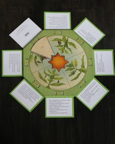 wasecabiomes — Wheel of Life-Life Cycle of a Butterfly
