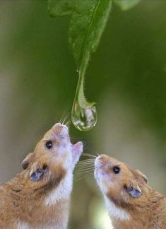 so that's how big a dew drop would look to a toad...