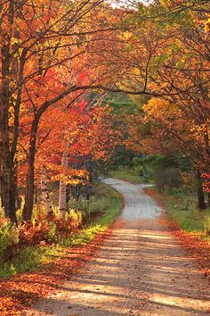 Fall Colors along a country road, Vermont | Enzo Figueres