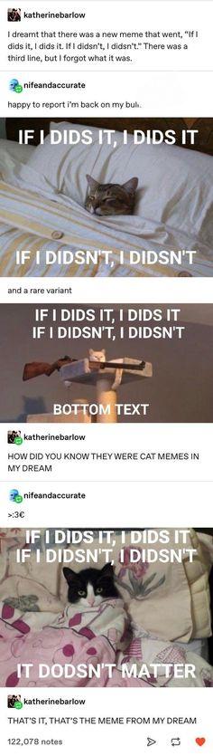 The dream meme Cute Funny Animals, Funny Cute, Haha Funny, Really Funny, Funny Stuff, Funny Things, Random Stuff, All Meme, Stupid Funny Memes
