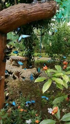 Beautiful Flowers Wallpapers, Beautiful Butterflies, Beautiful Birds, Animals Beautiful, Beautiful Nature Scenes, Beautiful Gif, Amazing Nature, Flower Phone Wallpaper, Butterfly Wallpaper