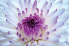 Flower Macro 8x12 by Ana Pontes