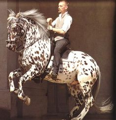 Bent Branderup, is an eccentric dressage rider from Denmark. I believe this horse is a knabstrupper.