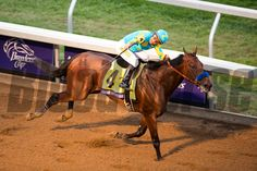 American Pharoah with Victor Espinoza up won the Breeders' Cup Classic at Keeneland Race Course in Lexington, Ky. on Saturday October 31, 2015. Photo by Mark Mahan