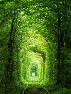Tunnel of Love, Ukraine If you visit the Tunnel of Love in Klevan, Ukraine with your significant other, then you can be sure that all your dreams and wishes will come true. This landmark is just a 3km stretch of railway line that makes a corridor of love, giving an inkling that nature is at its best.