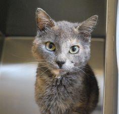 Un chat d'exception à la SPA Mauricie - Nouvelles - SPA Mauricie