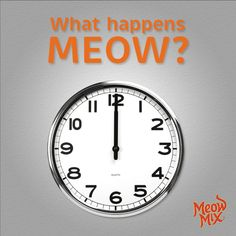 What happens meow?