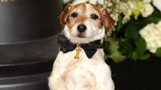 Uggie the Dog, Star of 'The Artist,' Has Died