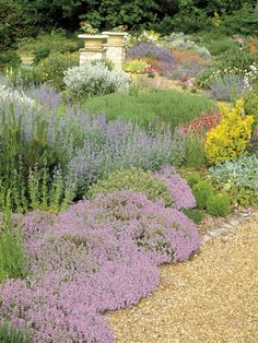 Dry garden with drought tolerant ground cover low maintenance plants thymes nepeta helianthemums summer flower July. Dry Garden, Gravel Garden, Garden Urns, Drought Tolerant Landscape, Drought Resistant Plants, Ground Cover Plants, Garden Cottage, Parcs, Backyard Landscaping