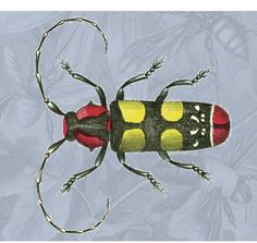 insect - Dover Publications - free clipart each week when you sign up