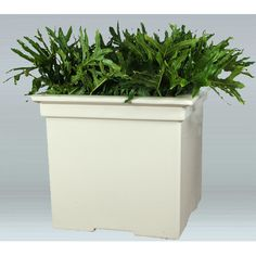 """Allied Molded Products Vista Composite Planter Box Color: Evening Shadows, Size: 16"""" H x 19"""" W x 19"""" D"""