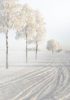Beautiful Nature Winter Hd Widescreen 11 Hd Wallpapers