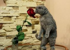 Funny #cats: They Smell Lovely