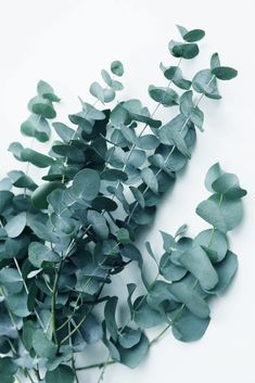 Teal Eucalyptus Clear Acrylic Box by Artprink Ph - 4 X 4 X 3 Aesthetic Backgrounds, Aesthetic Wallpapers, Wallpaper Wall, Iphone Background Images, Plant Aesthetic, Diy Frame, Wall Collage, Wall Art, Picture Wall