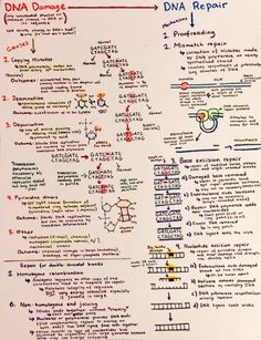 Introductory Biochemistry Flowcharts – Love, Life and Position-time Graphs Biology Lessons, Ap Biology, Science Biology, Teaching Biology, Life Science, Forensic Science, Computer Science, Biochemistry Notes, Molecular Genetics