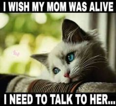 Cats complaining first world cat problems first world problems hall of fame memes sleep sleeping tired Phrase Choc, Film Maker, Cat Club, Cat Memes, Funny Memes, Stupid Memes, Stupid Funny, Hilarious, Mom I Miss You