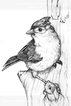 Pencil Sketch - Improve your drawing is to just get started with UnderTown. UnderTown is art drawing as pencil sketch, photo sketch and another sketch art. Pencil Art Drawings, Bird Drawings, Art Drawings Sketches, Animal Drawings, Drawing Birds, Pencil Sketching, Realistic Drawings, Art Illustrations, Bird Sketch