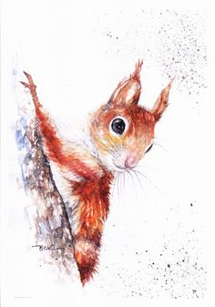 Print of Original Watercolour Painting by Be Coventry,Realism, Red Squirrel