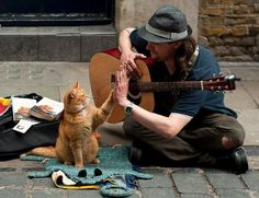 """A homeless musician James Bowen meets homeless red cat Bob changing his life forever. Last year, a book by James """"Street Bob cat: a man and a cat in t Crazy Cat Lady, Crazy Cats, Ami James, Street Cat Bob, Animal Pictures, Funny Pictures, Funny Pics, Gatos Cats, Rage Comics"""