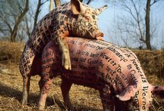 xubing pig - Google Search