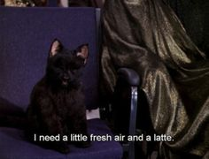 The 40 Greatest Things Ever Said By Salem The Cat from Sabrina the Teenage Witch. Loved this show, loved this cat more. Enjoy.