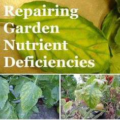 If plants fail to do well, despite adequate soil preparation, watering and mulching, it may be a sign of a nutrient deficiency. Garden Soil, Garden Landscaping, Garden Spaces, Outdoor Areas, Gardening Tips, Flower Pots, Herbs, Sign, Baby Bumps