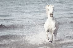 White Horse Horse Photography White Wall Art Equestrian
