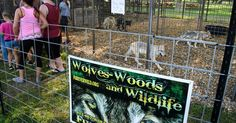 Appeals court ruling that fur farm owner can have one wolf may have ended the dispute, but not the controversy.
