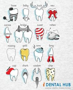 Dental Definitions - Lambert Pediatric Dentistry   #NewYorkCity   #NY   www.tribecapediatricdental.com