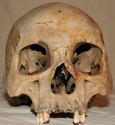 Skull Stock Photo 05 by Aleuranthropy on DeviantArt