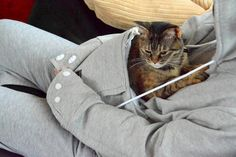 Genius New Hoodie Allows You To Wear Your Cat Wherever You Go