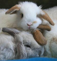 Adorable bunny pile!
