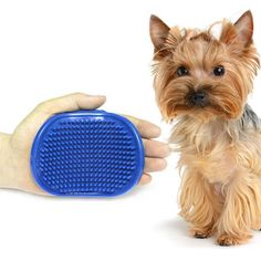 Unique Round Dog Massage & Grooming Tool   Tag a friend who would love this!   FREE Shipping Worldwide   Get it here ---> https://gleepaw.com/unique-round-dog-cat-pet-shower-brush-puppy-adjustable-massage-brush-bath-tool/