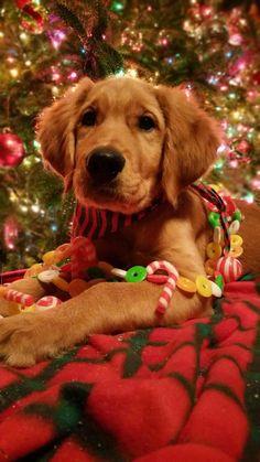 Waiting for Christmas, Dog