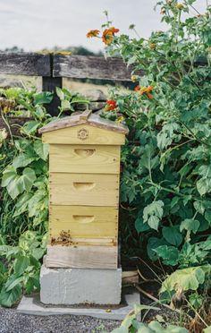 https://www.pinterest.com/ghullender1949/honey-bee-cottage/