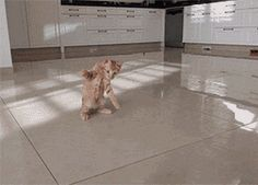 Pets - but look at that ridiculously photogenic, clean floor.