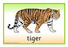 Jungle animal posters (SB9081) - SparkleBox