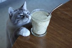Are cats allowed to drink smoothies? #smoothieoffensive #smoothies #catwantssmoothies