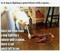 Dog + spoon + lobster = funny