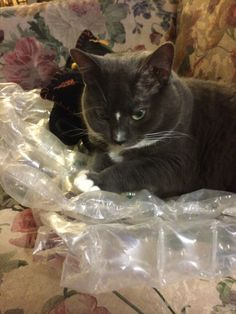 Cats and bubble wrap
