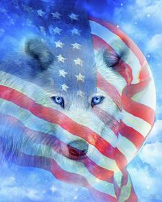 Wolf Moon Flag canvas print featuring the Patriotic art of Carol Cavalaris. Wolf Pictures, Cute Pictures, Beautiful Pictures, Canvas Art, Canvas Prints, Art Prints, Patriotic Pictures, Patriotic Quotes, Baby Wolves