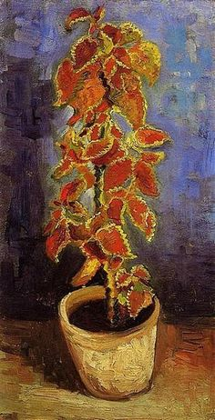 Coleus Plant in a Flowerpot, 1886 by Vincent van Gogh. Post-Impressionism. flower painting. Van Gogh Museum, Amsterdam, Netherlands