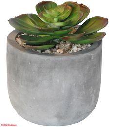 Finnmari 10x10x12 cm mehikasvi ruukussa Java, Planter Pots, Succulents, Succulent Plants