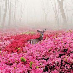 Deer chowing on the azalea patch
