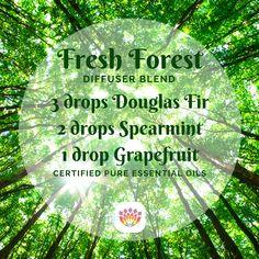 Fresh Forest Essential Oil Diffuser Blend Transformational Essentials