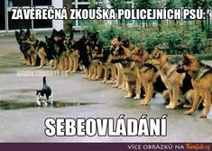 Funny pictures, jokes and funny memes sharing website to make others laugh. Get more funny pictures here. Login and share funny pic to make world laugh. Crazy Funny Memes, Really Funny Memes, Wtf Funny, Funny Jokes, Funny Shirts, Hilarious, Final Test, Sarcastic Jokes, Police Dogs