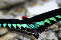 Butterfly looks like velvet