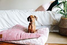 Our favourite blush dog accessories right now - blush dog collars, blush dog beds and more all in the perfect shade of pink! Online Pet Supplies, Dog Supplies, Dog Milk, Designer Dog Beds, Linnet, Pink Dog, Pet Beds, Training Your Dog, Dog Accessories
